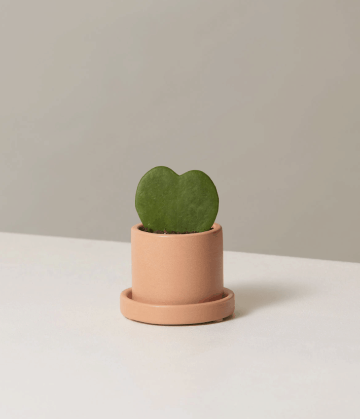 the sill potted plant