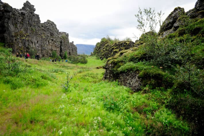 pingvellir national park greenery and cliffs
