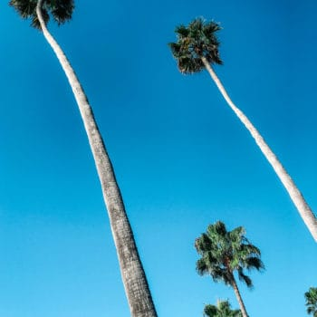 laguna beach palm trees and sky